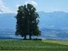 2016_08_03 Alpenpanorama 11